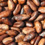 Brasil é reconhecido como país exportador de cacau fino e de aroma