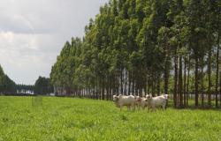 Contratação de crédito rural cresce 19% e alcança R$ 75 bilhões
