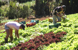 Inclusão de pequenos produtores em programas governamentais será debatida