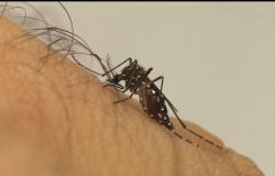 Mapa da dengue coloca Cuiabá em risco de surto da dengue e chikungunya.