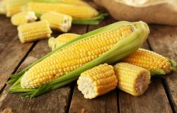 RO: criadores compram mais de 1,5 mil toneladas de milho