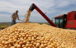 Cortes na safra ainda não impulsionam soja no Brasil