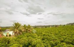Mato Grosso vai aumentar produção e área plantada com café em 2019, estima Conab