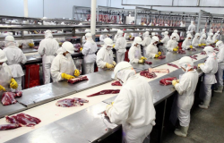 Número de bovinos abatidos em frigoríficos de Mato Grosso cresce 8,9%