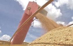 Agricultores de MT estão preocupados com o preço da soja já que a China pode reduzir negócios com o Brasil