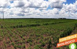 Mercado de biodefensivos cresce mais de 70% no Brasil em um ano