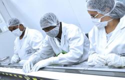 Bio Manguinhos desenvolve teste rápido para dengue, zika e chikungunya