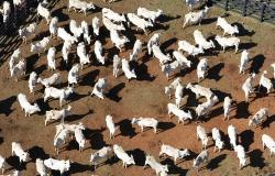 Ocorrência de caso atípico de Encefalopatia Espongiforme Bovina no Mato Grosso