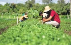 Ministério suspende mais de 126 mil declarações da agricultura familiar com indícios de irregularidades apontados pelo TCU