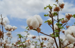 Valor da Produção Agropecuária é estimado em R$ 602,8 bilhões em 2019
