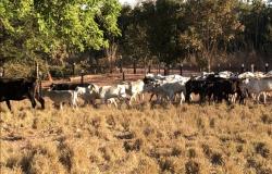 Polícia Civil prende grupo envolvido em roubos de gado na região metropolitana