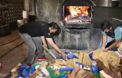Polícia Civil incinera mais de meia tonelada de entorpecentes em Rondonópolis