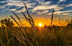 Livro apresenta soluções sustentáveis para a agricultura