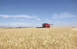Brasil vai importar 750 mil toneladas de trigo por ano com alíquota zero
