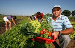 Mapa publica produtos da agricultura familiar com desconto em novembro