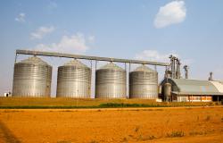 Soja lidera valor de produção na agricultura com R$ 104 bi