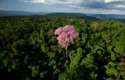 Governo estuda liberar exportação de madeira in natura da Amazônia