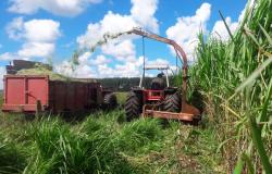 Projetos de crédito da Empaer viabilizam R$ 54,6 milhões para agricultores de 132 municípios