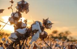 Municípios produtores de algodão, milho e soja têm maiores valores de PIB per capita