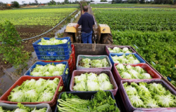 Mapa publica lista de produtos da agricultura familiar com desconto em março