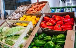 Delivery de produtos agrícolas cria novas oportunidades de negócio em MT