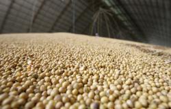 IBGE: safra de grãos deve fechar 2020 com alta de 2,3%