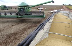 Previsão da safra de grãos cai, mas ainda é recorde, aponta Conab
