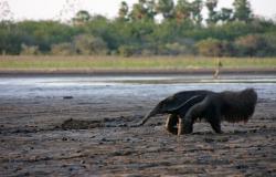 Pantanal de MT pode ter a maior seca dos últimos 30 anos, afirmam meterologistas