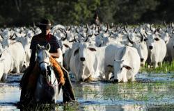 CONSERVAÇÃO: Pecuária alia produtividade à preservação do meio ambiente