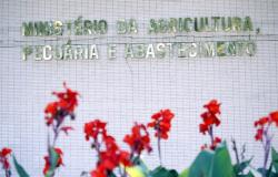 Ministério da Agricultura prevê crescimento de 27% na produção de grãos do país na próxima década