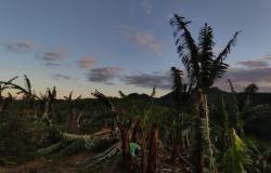 CMN aprova medidas para agricultores prejudicados por ciclone e pela pandemia de Covid-19