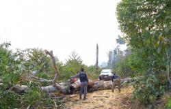 Equipes de fiscalização ambiental sofrem emboscadas em Colniza