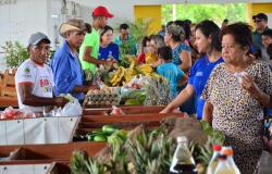 AL aprova lei que obriga compra de produtos de agricultura familiar