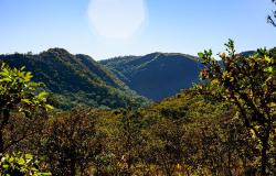 Dia Nacional do Cerrado é comemorado neste 11 de setembro