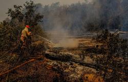 Queimadas no Pantanal e estiagem causam preocupação no MT e MS