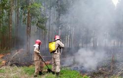 União homologa situação de emergência em decorrência dos incêndios florestais em MT