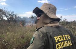 Politec conta com equipe especializada para apuração de incêndios florestais