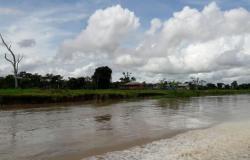 Agropecuária ocupa considerável extensão de terra no bioma Amazônia