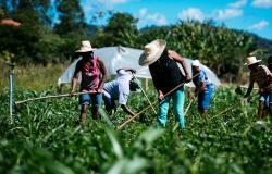 """""""Agricultura Familiar é fundamental para MT e vamos dobrar esse recurso em 2021"""", afirma governador a ministro"""