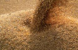 IBGE prevê safra recorde de 252 milhões de toneladas em 2020 com  recorde para Mato Grosso