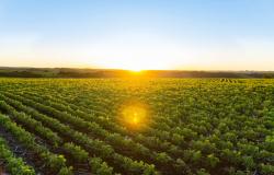 Valor da Produção Agropecuária deste ano é atualizado para R$ 806,6 bilhões