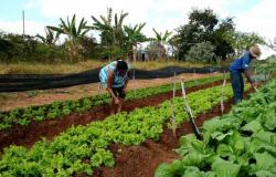 Publicado regulamento com diretrizes do fundo público para o financiamento de compra de terras para agricultores familiares