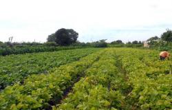 Banco do Brasil reforça linhas de crédito rural com R$ 1 bilhão