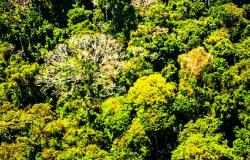 Governo lança programa de modernização e desburocratização das licenças ambientais