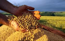 Brasil deve colher 265,9 milhões de toneladas de grãos na safra 2020/2021