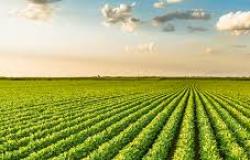Aprovado projeto que regulamenta a aquisição de terras por estrangeiros