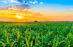 Contratação de crédito rural para safra 2020/2021 chega a R$ 125 bilhões em seis meses
