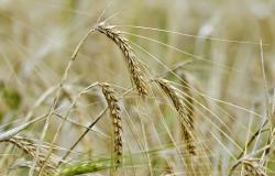 Supersafra:  produção de grãos é estimada em 272 milhões de toneladas