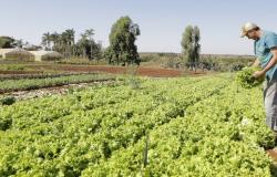 FINANCIAMENTO:  Investimento adicional no Pronaf pode chegar a R$ 2 bilhões