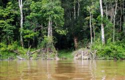 IBGE:  vegetação nativa teve maior redução de 2000 a 2018 no Pará e em Mato Grosso